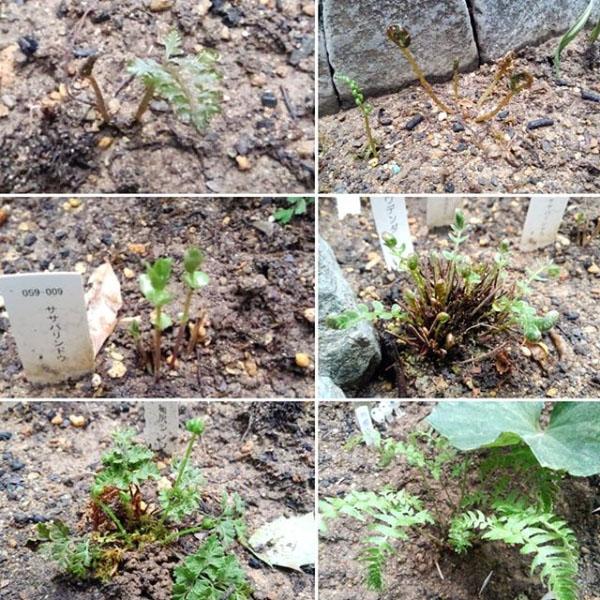 tsuboniwa20190419-6.jpg